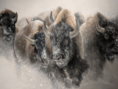 The Thundering Herd  Close-up